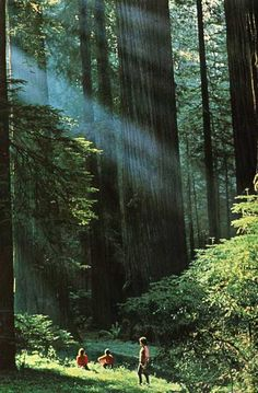 Redwoods, Muir Woods, California - One of my very favorite places ever!