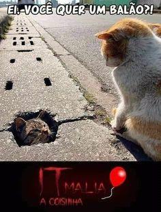 Funny Cats, Funny Animals, Cute Animals, Bts Meme Faces, Otaku Meme, Stupid Funny Memes, Animal Memes, Cat Memes, Funny Photos