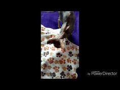 My cats Sphynx Betty - YouTube