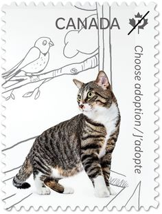 Canadian Postage Stamp featuring a cat and promoting adoption