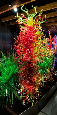 Dale Chihuly collection at the Morean Arts Center w/glass blowing classes etc.