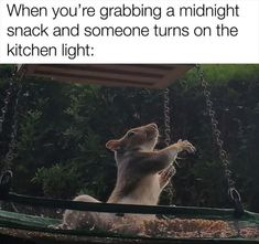 50 Funny Furry Animal Memes To Help You Laugh Away The Day 50 Funny Furry Animal Memes To Help You Laugh Away The Funny Furry Animal Memes To Help You Laugh Away The Day –- /cdn-cgi/l/email-pr Mom Pictures, Funny Animal Pictures, Funny Animals, Animal Pics, Best Memes, Funny Memes, Jokes, Funny Quotes, Meme Meme