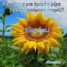 Καλημέρα φίλοι μου με όμορφες εικόνες!! Όμορφη μέρα να έχουμε!!! - eikones top Good Morning Good Night, Mom And Dad, Plants, Pictures, Plant, Planets