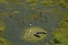 Photographic safaris in the Okavango Delta in Botswana. image: Vumbura Plains