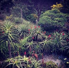 Abbey Gardens, Tresco | holeandcornermagazine.com