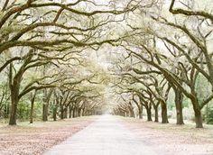 Wormsloe Plantation--Savannah, Georgia I love Savannah will plan to spend many weekends there.