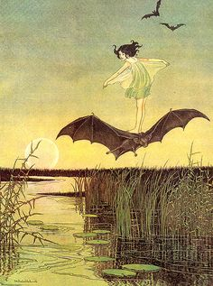 Ida Rentoul Outhwaite ~ The Witch's Sister on Her Black Bat ~ The Enchanted Forest ~ 1921 Vintage Fairies, Vintage Witch, Antique Illustration, Illustration Art, Fairy Drawings, Halloween Illustration, Witch Art, Vintage Artwork, Australian Artists