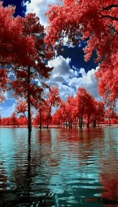 Diamond Painting,Red Maple Trees and Red Leaves on The Lake Scenic Lake Diamond Painting Round Diamond 40 Full Diamond Red Maple Tree, Red Tree, Beautiful World, Beautiful Places, Landscape Photography, Nature Photography, Image Nature, Belleza Natural, Nature Pictures