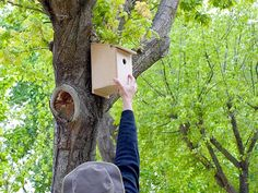 Hagamos un nido de madera para el jardín