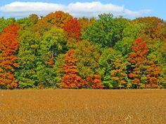 Gorgeous #autumn colors in #Delaware #Ohio.