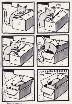 cats and boxes!