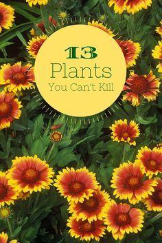 13 No-Kill Plants For Beginners --> http://www.hgtvgardens.com/flowering-plants/13-cant-kill-flowers-for-beginners?soc=pinterest