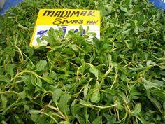 Madımak Otu  -  Fügen Büke #yemekmutfak.com Madımak Anadolu'nun çoğu bölgesinde bahar gelince doğada kendiliğinden yetişen,genç sürgünleri yenilen bir yabani ottur. Toprak üstüne yatık sürünücü sert gövdeli, yeşil yapraklı, çok yıllık otsu bir bitkidir. Orta Anadolu mutfağında yaygın olarak kullanılan madımak göçlerle şehirlerde de en bilinen ve en çok rağbet gören yabani otlardan birisi olmuştur. Bahar yağmurlarıyla birlikte Nisan ayında toplanmaya başlar.