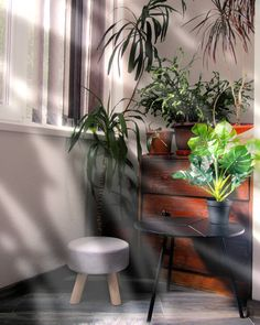"15 aprecieri, 1 comentarii - Georgeana G. Aciobăniței (@aciobaniteigeorgeana) pe Instagram: ""morning. ☀️ my green corner of the house. 🌱 the place where I relax. 🤍 where I drink my coffee. ☕…"""