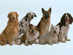 Какую породу собаки выбрать себе?