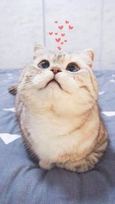 These cute kittens will bring you joy. Cats are wonderful friends. Cute Kittens, Kittens Meowing, Cute Funny Animals, Cute Baby Animals, Funny Dogs, Cute Cat Memes, Cute Cat Wallpaper, Pitbull Wallpaper, Drawing Wallpaper