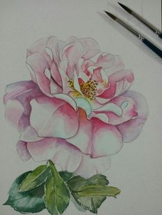 Portrait of Rose.. watercolor on paper by Pushpa Sharma