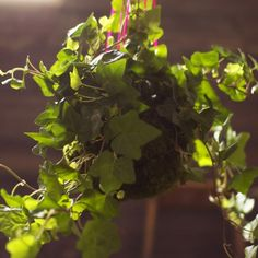 tutorial on how to make a potless hanging plant (held in a 'moss pot')