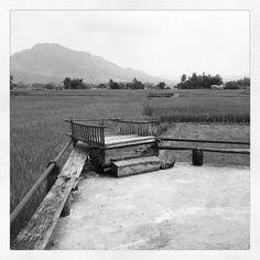 #Monochrome #BlackAndWhite #Landscape #Nature #RiceField #Loei #Thailand #เอกรงค์ #ขาวดำ #ภูมิทัศน์ #ธรรมชาติ #นาข้าว #ไทดำ #บ้านนาป่าหนาด #เลย