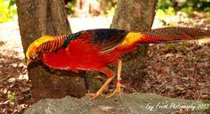 Brightly coloured bird
