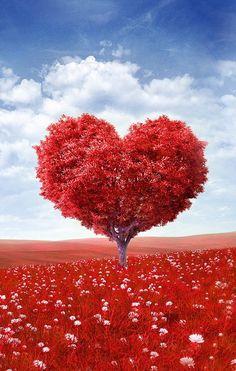 Proverbios 15:13 El corazón alegre hermosea el rostro; Mas por el dolor del…