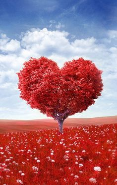 What fruit is your heart giving off? Let me coach you to bring the good stuff out of you! www.Heartswithapurpose.com