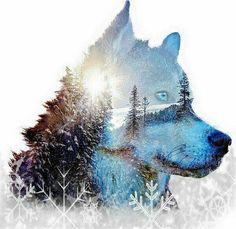 Wolf Wallpaper, Tumblr Wallpaper, Animal Wallpaper, Whats Your Spirit Animal, Wolf Spirit Animal, Beautiful Wolves, Animals Beautiful, Cute Animals, Fantasy Wolf