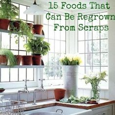 15 Foods That Can Be Regrown From Scraps