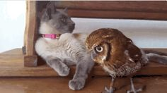 """The owl and the pussycat went to sea in a beautiful pea-green boat. Animals And Pets, Baby Animals, Funny Animals, Cute Animals, I Love Cats, Cute Cats, Gatos Cats, Tier Fotos, Mundo Animal"
