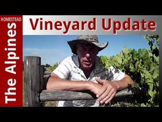 Vineyard update and Tour around 1/4 Hectare Property