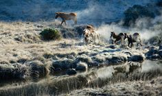 Kaimanawa Wild Horse Muster  -  New Zealand by Kimber Brown on 500px