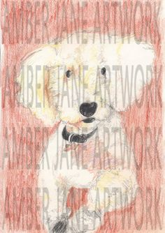 coloured pencil, cute Maltese, drawing, print, wall décor, wall art, instant download, A4, JPEG by AmberJaneArtwork on Etsy