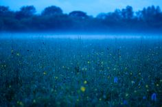 Night meadow, Wiltshire, England by Barney Wilczak Meadow Flowers, Wild Flowers, Leaves Of Grass, Environment Concept Art, Great Britain, Mystic, To Go, England, Birds