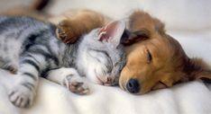 Kitten and puppy spoon sleeping