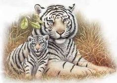 Image result for tiger cub tattoo designs