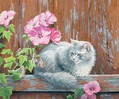 In the Pink – Cat by Lyn Estall