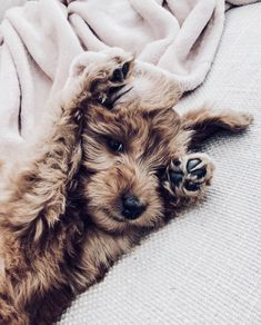 All you need to know about Pets Cute Puppies, Cute Dogs, Dogs And Puppies, Cute Babies, Doggies, Cute Funny Animals, Cute Baby Animals, Animals And Pets, Tier Fotos