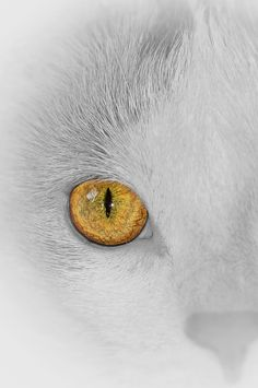 Amber Cat Eye by Cherylorraine Smith.