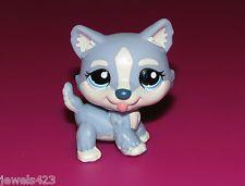 Littlest Pet Shop Husky #1684 LPS Blue Dog