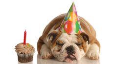 ¿Un año para el hombre equivale a siete años para los perros?
