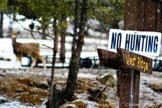 No Hunting -  Deer in Colorado