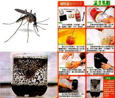A Simple Hand Made Mosquito Trap Very Way To Kill Mosquitos