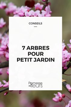 7 perfect trees in a small garden- 7 arbres parfaits en petit jardin Discover our selection of small trees, perfectly suited to small plots, city gardens or housing estates! Land Art, Backyard String Lights, Garden Online, Outdoor Furniture Plans, Outdoor Cafe, Garden Trees, Small Trees, Small Gardens, Permaculture