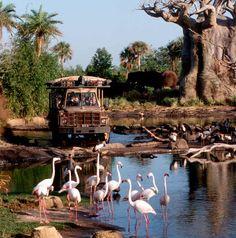 Animal+Kingdom+Rides | Disney's Animal Kingdom / Cheap Discount Animal Kingdom Tickets