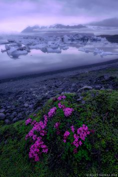 Jökulsárlón Wildflowers by Scott  Smorra on 500px wildflowers at the Jökulsárlón Glacier Lagoon in southeastern Iceland.