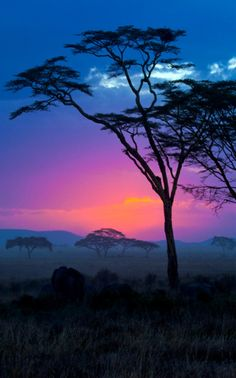 Safari mit Sonnenuntergang