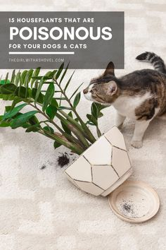 Check out this list of houseplants that are toxic to cats and dogs! Make sure that your pets are kept safe! #toxicplantstopets #petsafety Poisonous Indoor Plants | Poisonous Houseplants | Poisonous House Plants | Indoor Plants that are Toxic | Indoor Plants that are Toxic to Cats | Indoor Plants that are Toxic to Dogs | Houseplants that are Toxic | Houseplants that are Toxic to Cats | Houseplants that are Toxic to Dogs | Indoor Plants that are Toxic to Pets | House Plants Decor, Plant Decor, Plants Poisonous To Dogs, Dracaena Plant, Household Plants, Easy Plants To Grow, Apartment Plants, Iron Plant, Low Light Plants