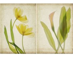 Two Botanical Art Prints Scanned Flowers  Calla Lily by JudyStalus, $37.00