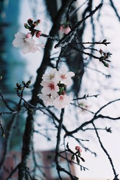 Find images and videos about pink, nature and flowers on We Heart It - the app to get lost in what you love. Beautiful World, Beautiful Images, Flor Magnolia, Spring Colors, Image Photography, Art World, Spring Time, Garden Plants, Outdoor Gardens