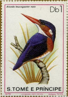 Protección de la naturaleza: Aves Alcedo leucogaster nais Martín Pescador 21/12/1979 Santo Tomás y Príncipe
